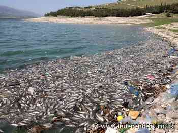 At least 40 tonnes of dead fish wash up on shore of polluted Lebanese lake