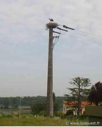 Trizay : les cigognes ont fait leur nid - Sud Ouest