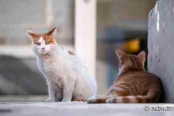 À Louviers, l'association Amour de nos 4 pattes câline les chats errants - actu.fr