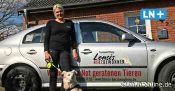 Tierstiftung in Ratekau sucht neues Zuhause für misshandelte Hunde - Lübecker Nachrichten