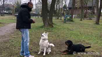 Hund ohne Leine: Neue Initiative könnte Hundebesitzer in Hohen Neuendorf begeistern - moz.de