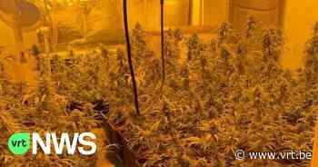 Cannabisplantage met 800 planten ontdekt in Ukkel - VRT NWS