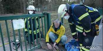 Bei Hamburg: Rehkitz von Feuerwehr aus Stahltor gerettet - Hamburger Morgenpost