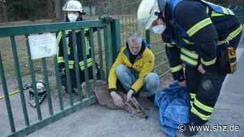 Tierrettung in Glinde: Feuerwehr befreite eingeklemmtes Reh   shz.de - shz.de