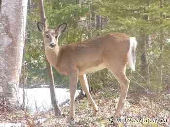 Two hunters get $3,000 in fines for poaching deer near Huntsville