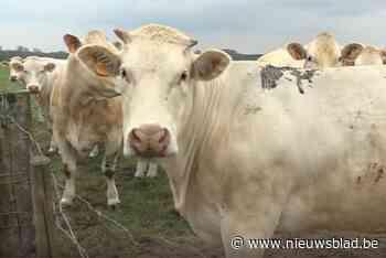 """Ook landbouwers zien komst van pijpleiding niet zitten: """"Maken onze grond kapot"""""""