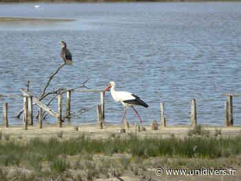 Les visiteurs d'Automne Le Teich mardi 19 octobre 2021 - Unidivers
