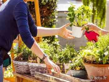 Avis aux amateurs de jardinage : troquez vos graines et plantes à Epernon ce dimanche - actu.fr