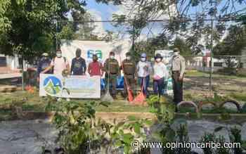 Siembra de árboles y limpieza en Aracataca - Opinion Caribe