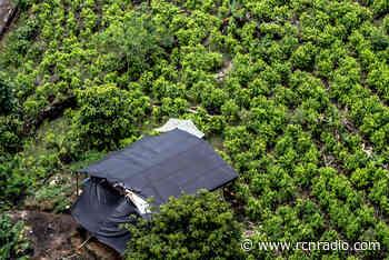 Buscamos es poder regular el mercado de la coca en Colombia: senador Iván Marulanda - RCN Radio