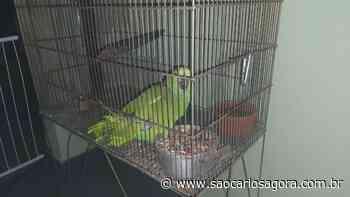 Papagaios são flagrados em cativeiro no Planalto Paraíso - São Carlos Agora