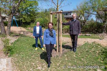 Widmann-Mauz MdB: Baumspende für den Spielplatz in Kusterdingen-Jettenburg - Beschaffungsdienst GaLaBau