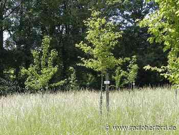Streit um falsch gepflanze Bürgerwald-Bäume in Kirchlengern - Radio Herford