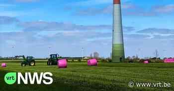 """Roze balen in de velden van Wuustwezel voor Kankerfonds: """"We hebben drie vrouwen van collega's verloren aan kanker"""" - VRT NWS"""