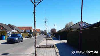 Ökologie und Natur: Neuenhagen pflanzt 33 Schwedische Mehlbeeren - moz.de
