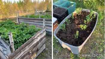 Greater food sovereignty aim of new garden project in Kitchenuhmaykoosib Inninuwug First Nation