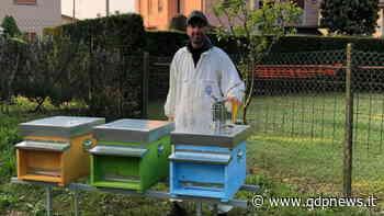 San Vendemiano, nuovo progetto a favore dell'ambiente: posizionate tre arnie di api nelle vicinanze del laghetto di Fossamerlo - Qdpnews