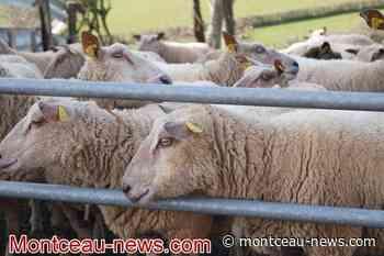 Saône-et-Loire - Montceau News