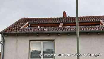 Feuerwehr Helmstedt rettet einen Hund vom Dach