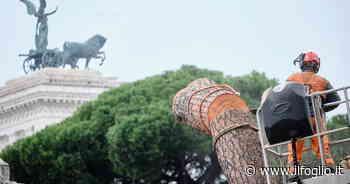 Roma è una città piena di tronchi mozzati - Il Foglio