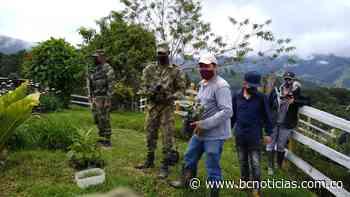 En Salento de celebró el Día del Árbol, sembrado diversas especies - BC Noticias