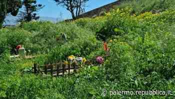 Palermo, al cimitero dei Rotoli le lapidi scomparse sotto cumuli di erbacce - La Repubblica