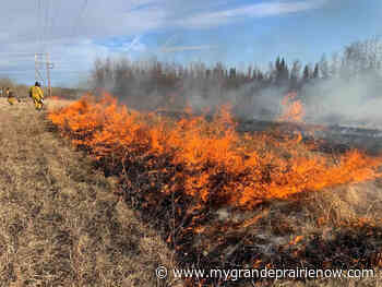Grande Prairie Forest Area wildfire danger back up to moderate