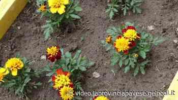 Fiori e ortaggi per i bimbi del nido Arcobaleno a Vigevano - La Provincia Pavese