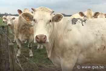 """Ook landbouwers zien komst van pijpleiding niet zitten: """"Maken onze grond kapot"""" - Gazet van Antwerpen"""
