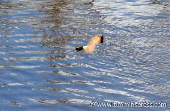 Snow depth, water content high - Timmins Press