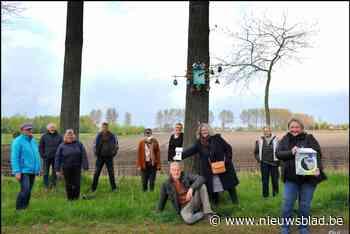 FOTO. Lo-art is op dreef: een kilometer vogelhuisjes - Het Nieuwsblad