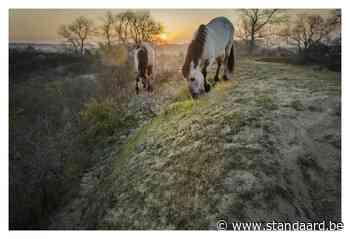De Panne – Natuurreservaat De Westhoek - De Standaard