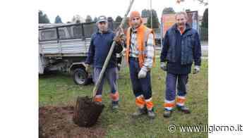 Nuovi alberi in arrivo per ricreare i viali della Parabiago d'antan - IL GIORNO