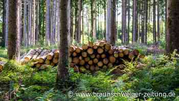 Forstwirtschaft: Fichtenholz spaltet Bayern und Bund