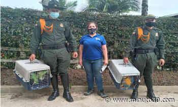 Rescataron guacamayas, sinsontes, gorriones y loras que estaban en cautiverio - Minuto30.com