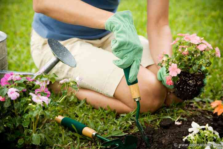 Study: Regular gardening improves mental and physical wellbeing