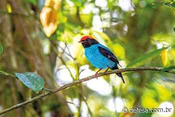 Livro sobre avifauna do Parque Atalaia inspira observadores - Defesa - Agência de Notícias