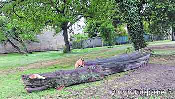 Villepinte. Des arbres abattus pour la bonne cause - ladepeche.fr