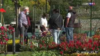 La Fête des plantes de Fayence, un événement à ne pas rater pour les jardiniers - LCI