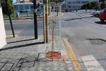 Projeto 'Formiga Mais Verde' reurbaniza Rua Barão de Piumhi - G1