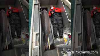 Massive sturgeon caught in Detroit River