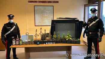 Torpignattara, mini serra di marijuana in casa: nei guai coltivatore a km 0