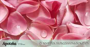 Agua de rosas: beneficios para la piel y trucos para elaborarla en casa - Redacción Médica