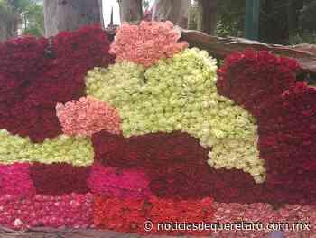 Piden a autoridades apoyo para venta de rosas - Noticias de Querétaro