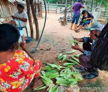 Investigadoras logran cultivar sandía, maíz y ahuyamas en el árido Manaure - El Universal - Colombia