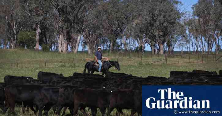 Budget's $371m biosecurity boost will put 'protective ring' around agriculture, PM says