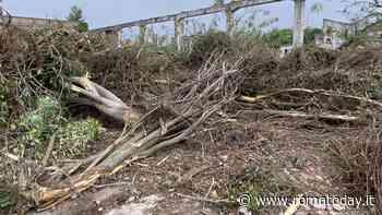 """Ex Snia, sul taglio degli alberi Montuori chiede l'intervento del Prefetto: """"Valutare il danno ambientale"""""""