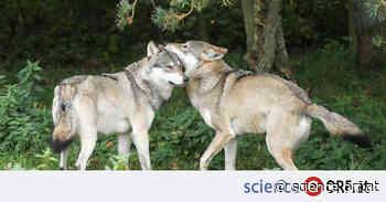 Biologie: Inzucht ist weit verbreitet - ORF.at