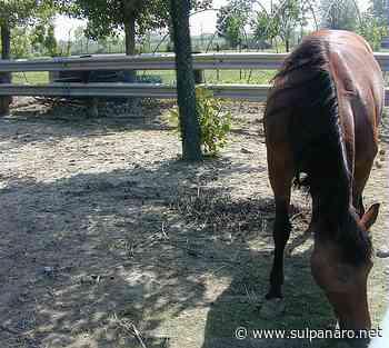 Giovane cade da cavallo al centro ippico di Soliera - SulPanaro