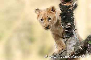 Hastings Highlands directs staff to create exotic animal bylaw - mybancroftnow.com